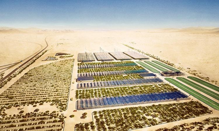 В Иордании стартовал сельскохозяйственный проект Sahara Forest