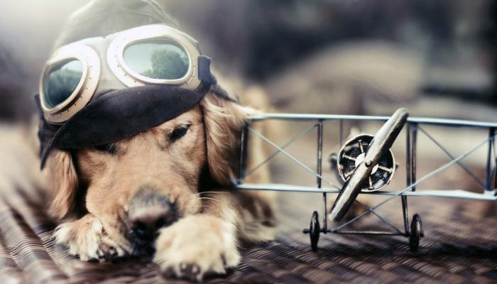 Blockchain pet insurance service to launch in Russia