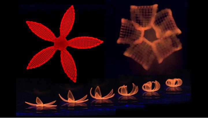 В США на 3D-принтере напечатали шевелящиеся искусственные цветы