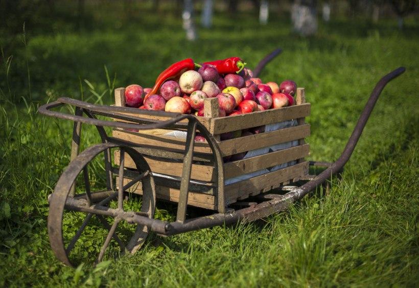 В США показали робота для сбора яблок