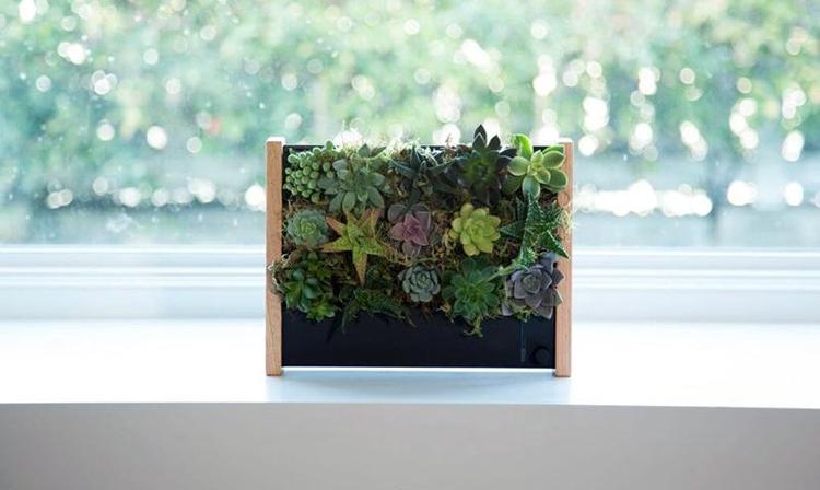 Вертикальные экогрядки EcoQube позволяют выращивать овощи без почвы