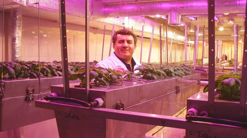 Yuriy Martirosian tells about necessary aeroponics popularization in Russia