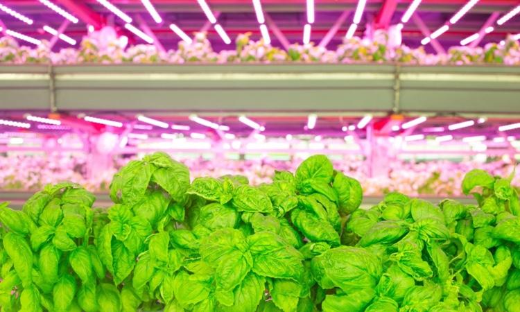 За 5 лет объемы мирового рынка вертикальных ферм достигнут $6 млрд