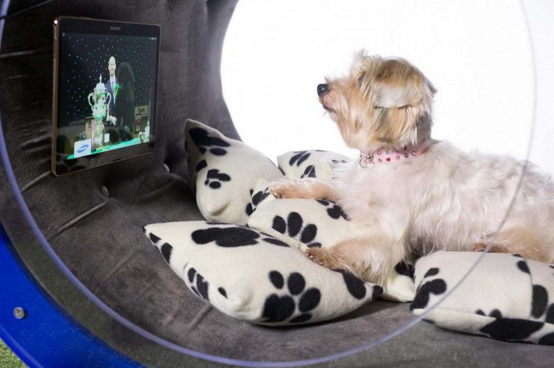 разумный домик для собак