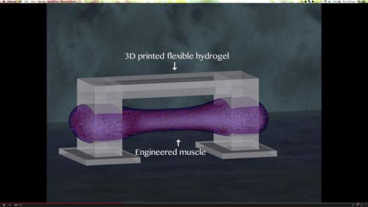 Biological-Machines-In-The-Making-3D-Printed-Bio-Bots-Combine-Biology-With-Electricity