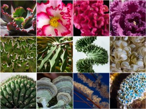 Examples of life forms that inspired Floraform